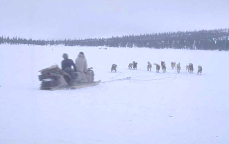 Unidentified Innu travelling on a komatik pulled by a dog team 1966-1968 (photo Georg Henriksen).