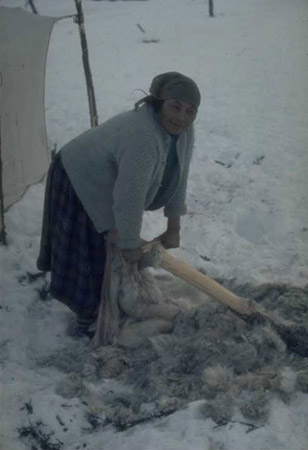 Unidentified Innu woman using a beamer to remove fur from a caribou hide, ca. 1966-68 (photo Georg Henriksen)